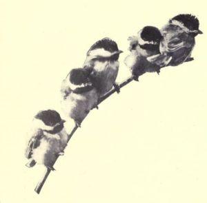 bird-images-63