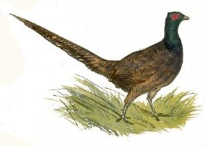 bird-images-56