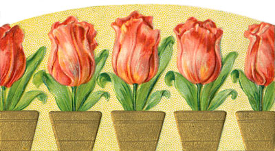 tulips-7