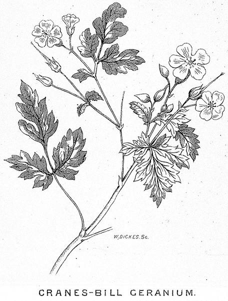 bw-flowers-17