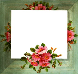 empty-pink-flower-frame