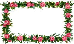 pink-rose-frame