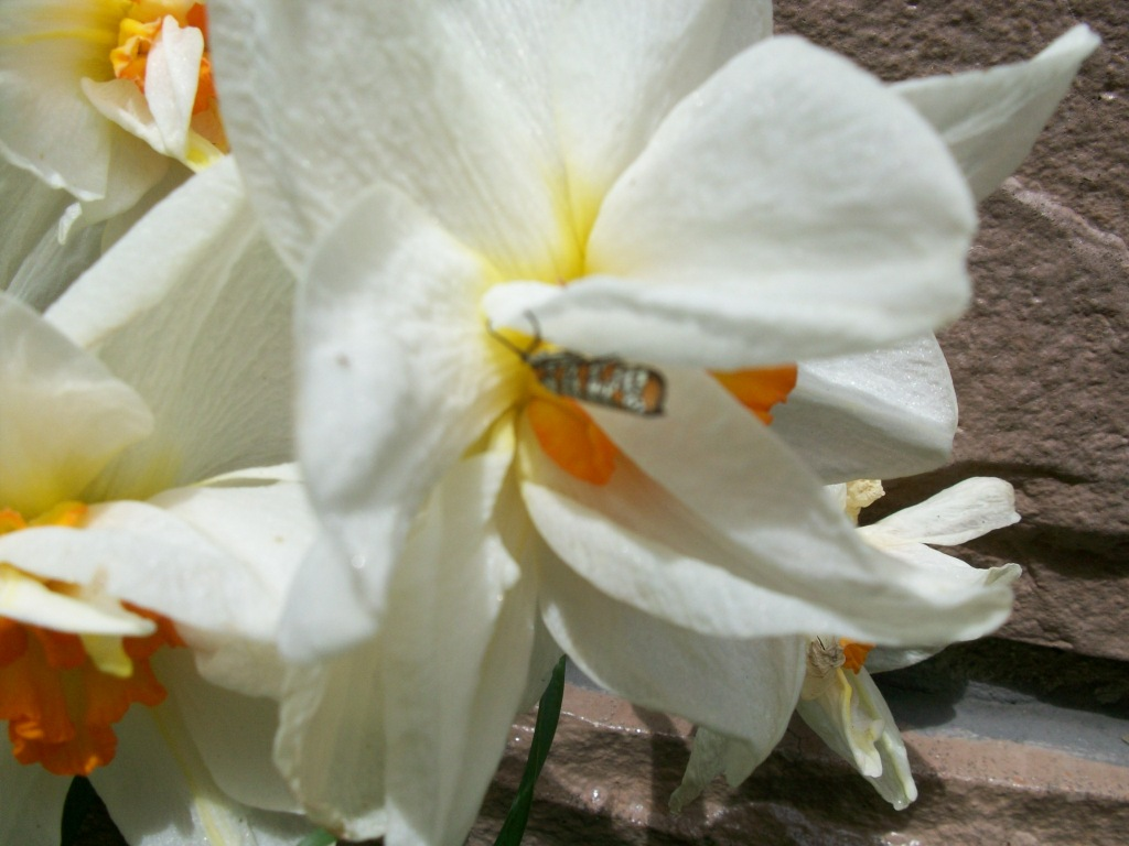May2011Flowers 020